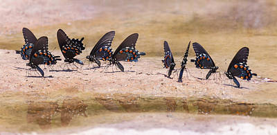 Photograph - Butterfly Reflections by Melinda Fawver