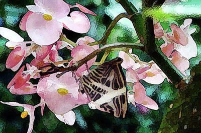 Photograph - Butterfly Rest by Betsy Zimmerli