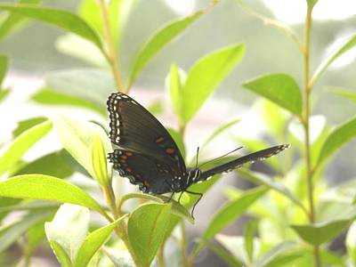 Photograph - Butterfly Resting On Green by Belinda Lee