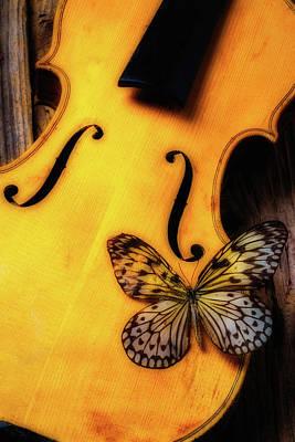 Violin Photograph - Butterfly Resting On Violin by Garry Gay