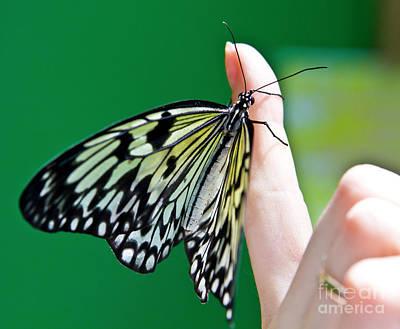 Photograph - Butterfly Rice Paper - Rice Dragon by Irina Afonskaya