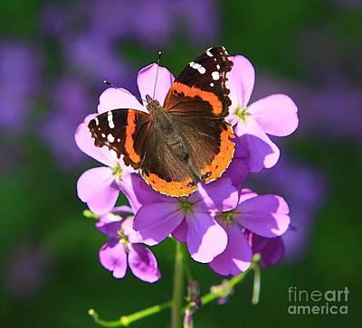 Butterfly Art Print by Robert Pearson