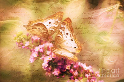 Mixed Media - Butterfly Romance by Tina LeCour