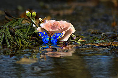 Israeli Flag - Butterfly Rose by Catherine Melvin