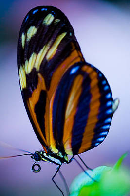 Photograph - Butterfly by Ryan Heffron
