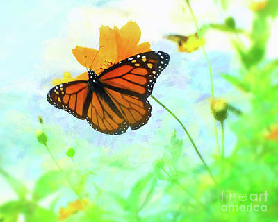 Beautiful Butterfly Photograph - Butterfly by Scott Cameron
