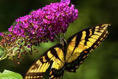Studio Grafika Zodiac - Butterfly Season by Karol Livote