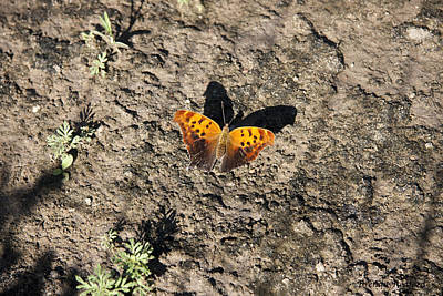 Photograph - Butterfly Shadow by Brenda Redford