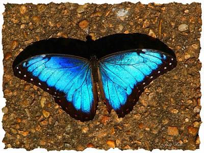 Butterfly Shadow Art Print by Judy  Waller