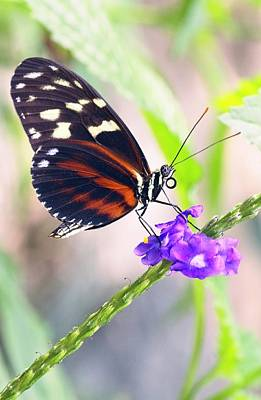 Photograph - Butterfly Side Profile by Garvin Hunter
