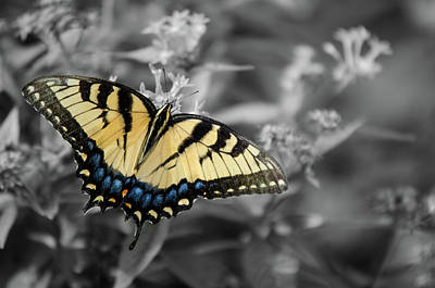 Photograph - Butterfly Splash by Tammy Ray
