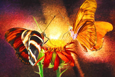 Photograph - Butterfly Standoff by Susan Rissi Tregoning