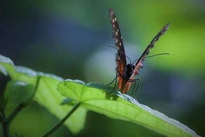 Animals Royalty-Free and Rights-Managed Images - Butterfly Staredown by OzBen Photography