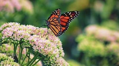 Photograph - Butterfly by Steve ODonnell