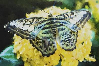 Painting - Butterfly  by Steven Parker