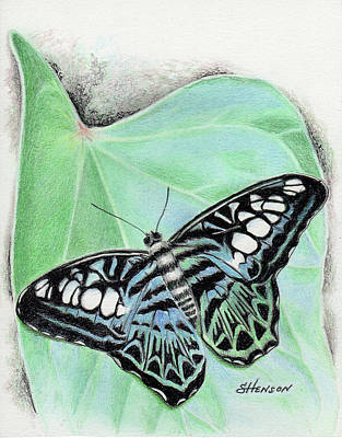 Painting - Butterfly by Sue Henson
