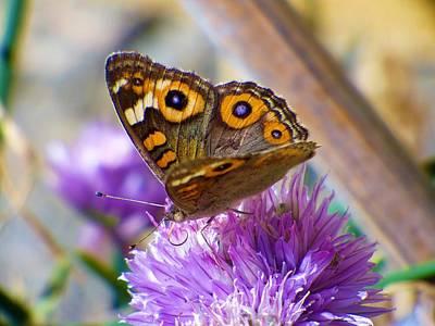 Photograph - Butterfly Summer by Jennifer Baulch