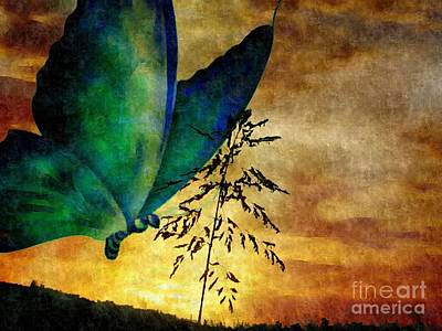 Photograph - Butterfly Sunrise by Maria Urso