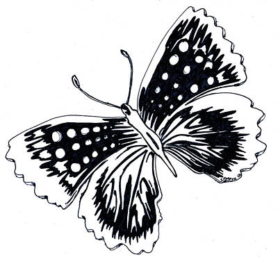 Drawing - Butterfly by Susan Turner Soulis