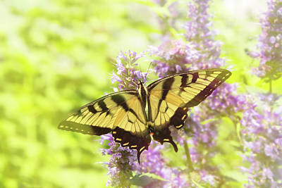 Photograph - Butterfly - Swallowtail - Hard To Swallow by Mike Savad