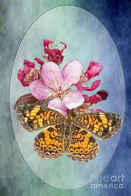 Pearl Crescent Photograph - Butterfly Sweetness by Bonnie Barry