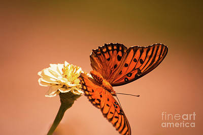 Butterfly Photograph - Butterfly Taking Off by Zina Stromberg