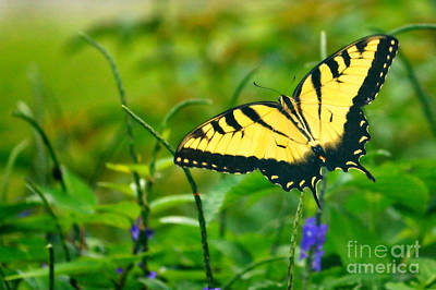 Photograph - Butterfly Through The Garden by Carol Groenen