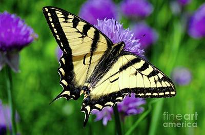 Photograph - Butterfly Time by Sandra Updyke