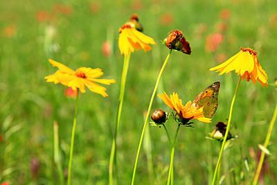 Butterfly  Art Print by Toni Hopper