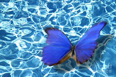 Butterfly Print by Tony Cordoza