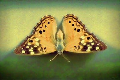 Photograph - Butterfly by Tony Grider