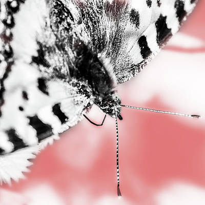 Digital Art - Butterfly by Tommytechno Sweden