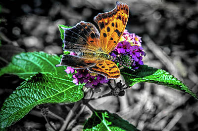 Colorful Photograph - Butterfly  V1 by John Straton