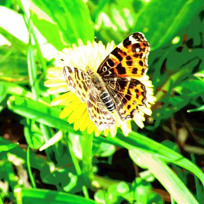 Photograph - Butterfly by Vesna Martinjak