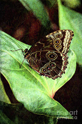 Photograph - Butterfly Walk by Jackie Farnsworth