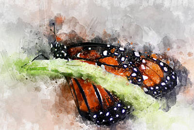 Photograph - Butterfly Watercolor by Michael Colgate