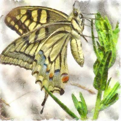 Painting - Butterfly Watercolor by Tracey Harrington-Simpson