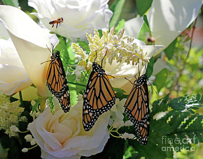 Photograph - Butterfly Wedding Flowers Photo by Luana K Perez