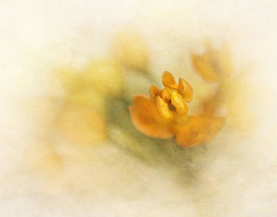 Photograph - Butterfly Weed I by David and Carol Kelly
