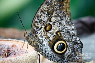 Photograph - Butterfly by Wilko Van de Kamp