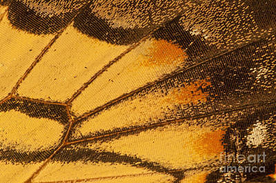 Photograph - Butterfly Wing by David Waldrop