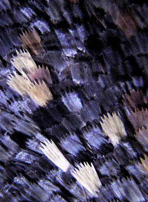 Microscopic Mixed Media - Butterfly Wing Water Colour 001 by Marcus Kett
