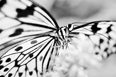Photograph - Butterfly Wings 2 - Black And White by Marianna Mills