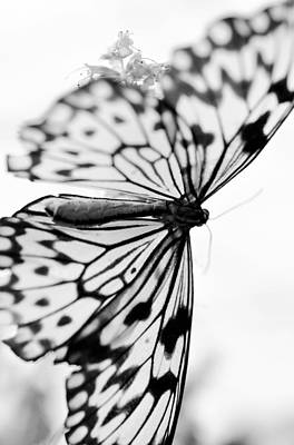 Photograph - Butterfly Wings 4 - Black And White by Marianna Mills