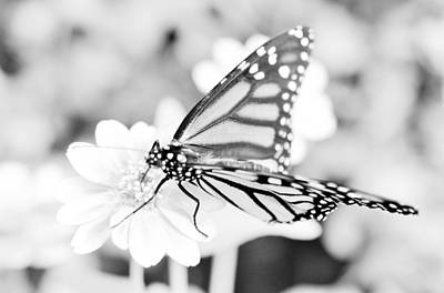 Photograph - Butterfly Wings 6 - Black And White by Marianna Mills