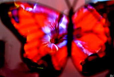 Image Of Captured Landforms Digital Art - Butterfly Wings  Collection I by Debra     Vatalaro