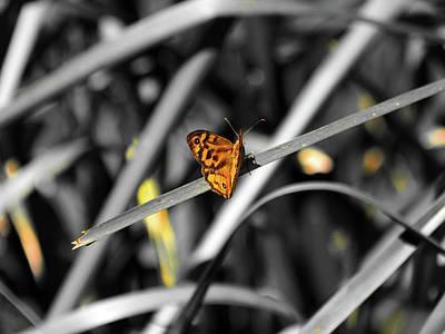 Photograph -  Butterfly Wings by Miroslava Jurcik