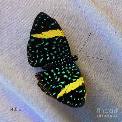 Photograph - Butterfly Wings On Wings Macro Square by Felipe Adan Lerma