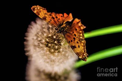Photograph - Butterfly Wish by Gerald Kloss