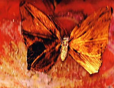 Butterfly With Dark Wing Print by Anne-Elizabeth Whiteway
